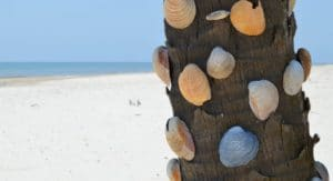 Shells on the beach on St George Island Florida